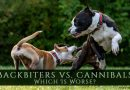 Backbiters vs. Cannibals: Which Is Worse? - a dog biting at another dog's back
