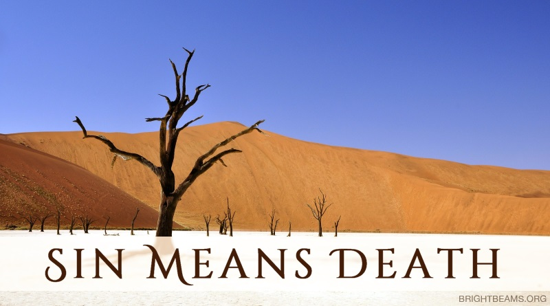 Sin Means Death - dead trees in a desert